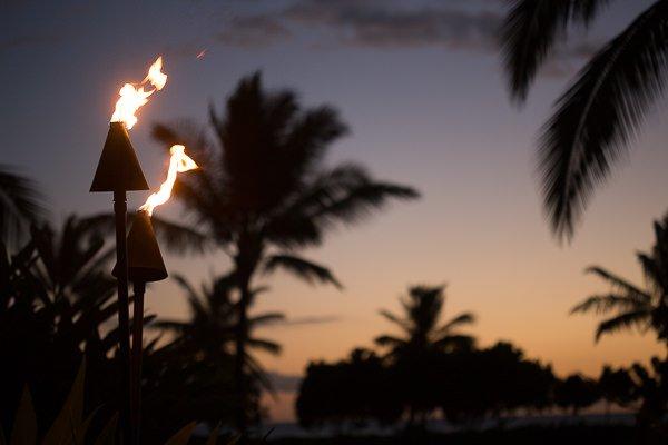 Torch Palms